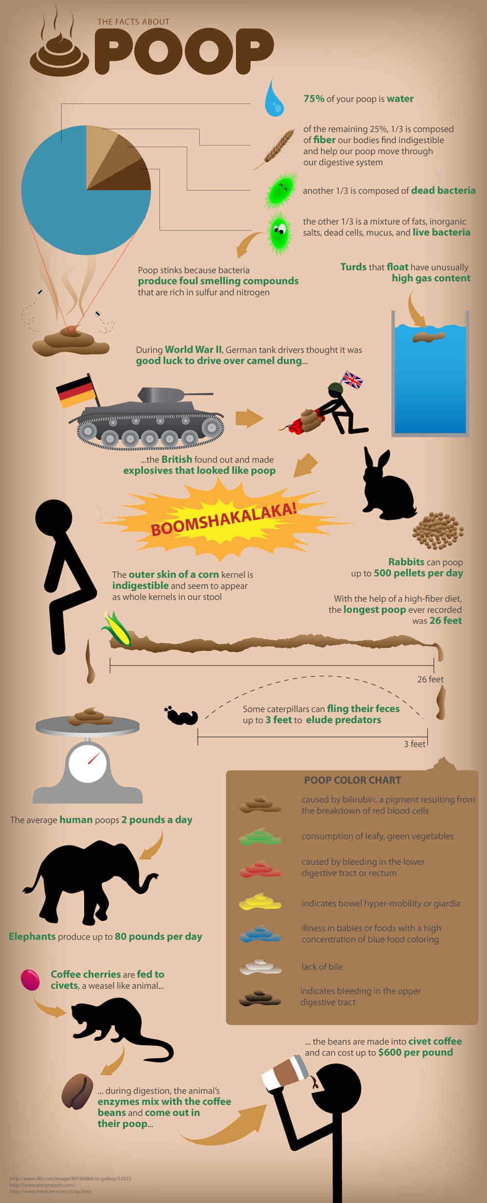 Infografía - Los hechos sobre la caca